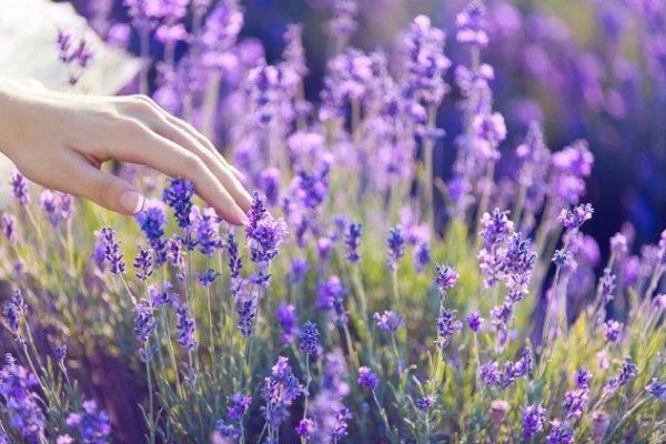 Эстрогены в травах для женщин, шалфей
