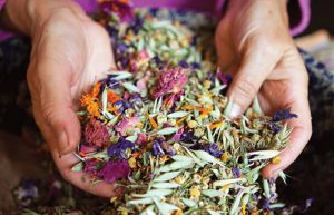 Травы для нормализации и лечения гормонального фона у женщин