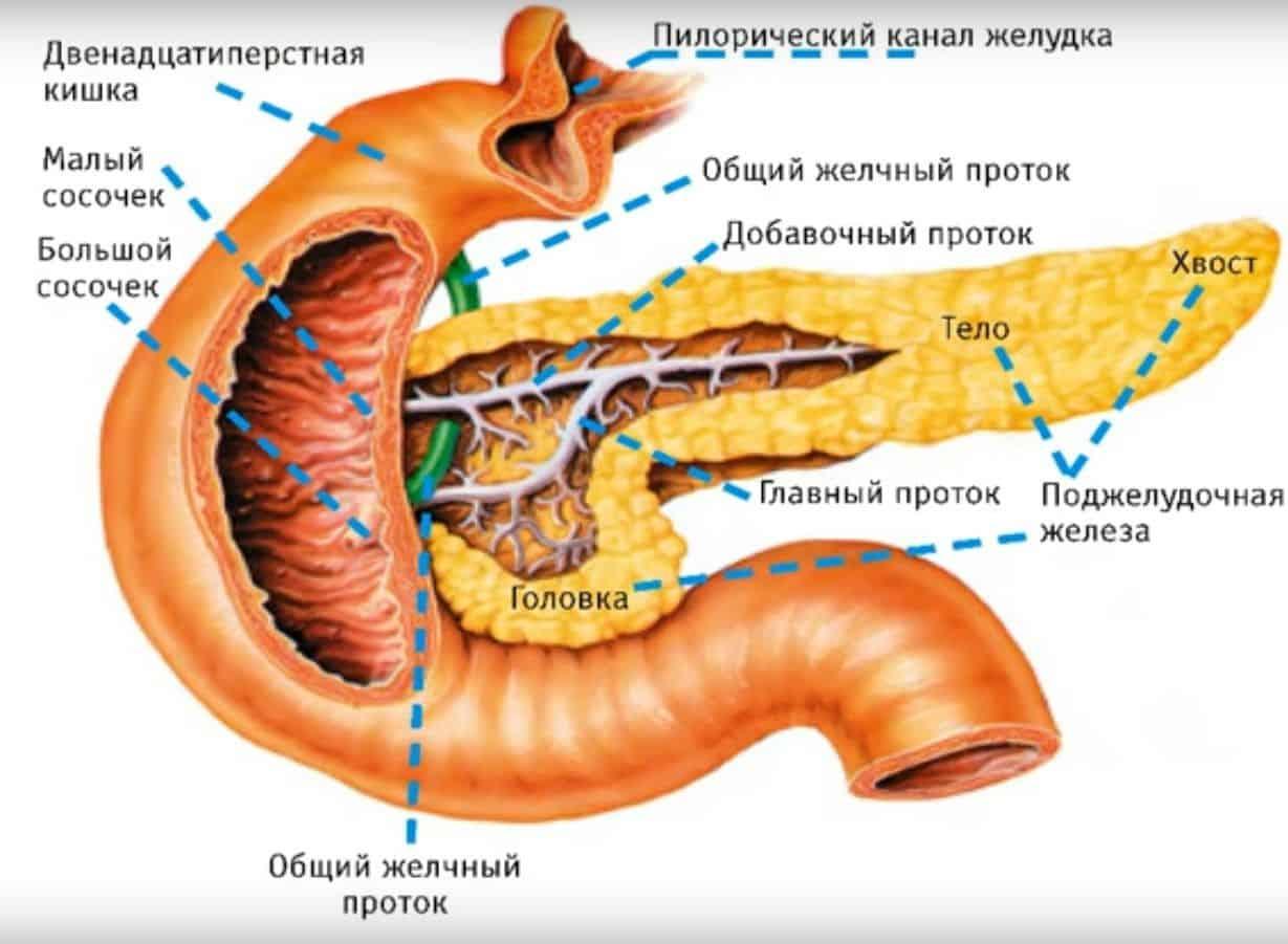 Гормоны поджелудочной железы и их функции