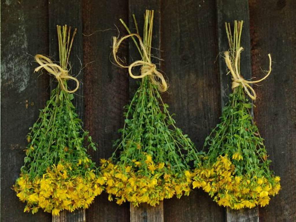 зверобой - трава для поднятия иммунитета