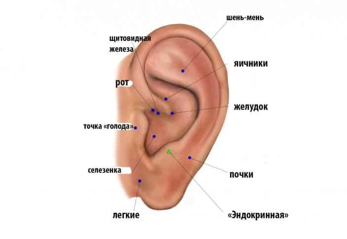 точки для похудения на ушах