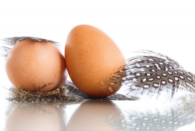 Польза и вред яиц цесарок