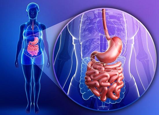 продукты полезные для желудка сохранят здоровье органа