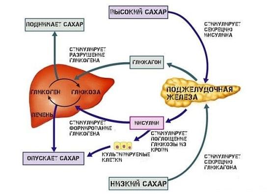 гормоны печени