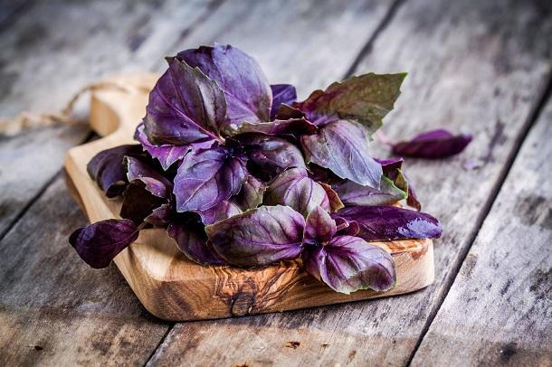Базилик фиолетовый польза и вред для здоровья