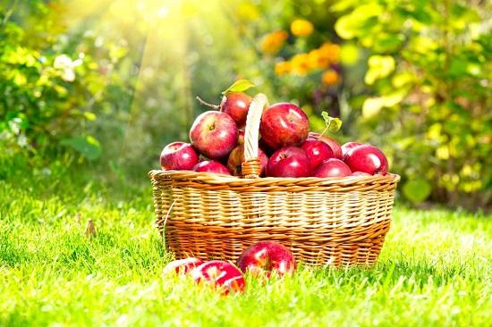 самые полезные фрукты и овощи: яблоки