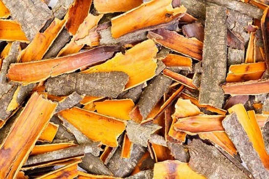 травы для очищения организма: кора крушины